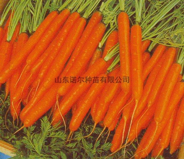 超甜小胡萝卜