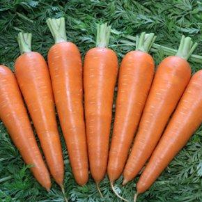 新冠肺炎疫情防控期间茄果类蔬菜生产技术指导意见